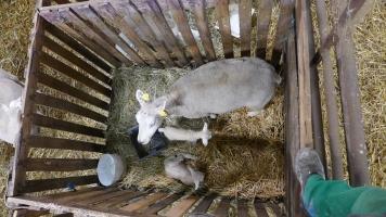 matka s dvojčaty