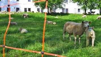 Ovce - chovatelské pomůcky I. Areály